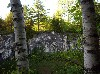 Birches and old marble quarry.