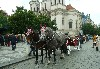 Horse and carriage in Old Town