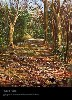 'The Path, Woods Hole, Cape Cod, Massachusetts,' oil on canvas, by Jon Goldman.