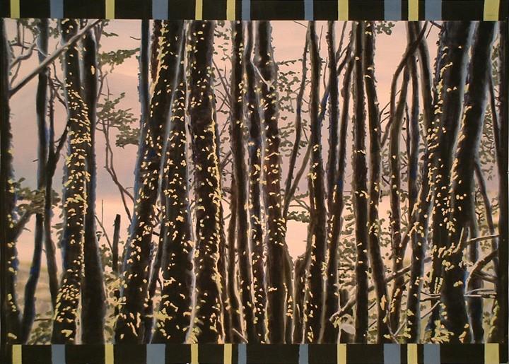 Ushuaia Trees